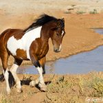 horseL